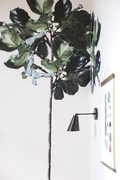 Fiddle Leaf Green Fig Tree Decal on white wall with Art and Wall lamp.