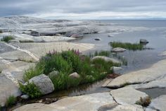 by the sea Stockholm Archipelago, Garden Stones, Continents, Norway, Sweden, Golf Courses, Coastal, World, Water