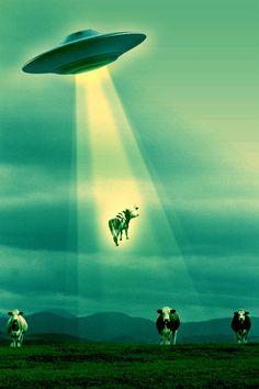 """Se demuestra que los extraterrestres se llevan vacas, y claro """"así se hacen una idea de la inteligencia del ser humano"""". Así les va."""