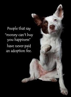 Inspirational Dog Quotes | awesome, cool, inspirational, inspirational quotes, 18 Inspirational ...
