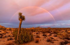 Rainbow and clearing storm over Joshua Tree National Park, Calif. (© Greg Epperson/Alamy)                                                               My Brother in laws favorite place....I wish to spread his ashes here one day <3