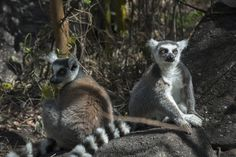 PHOTO GALLERY: Madagascar Animals http://greenglobaltravel.com/2015/04/04/madagascar-animals-photo-gallery/