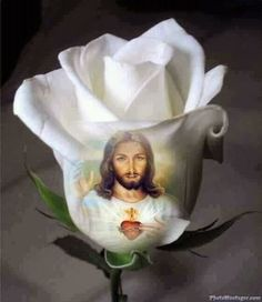 Heavenly Mother Mary, what a beautiful Rose that You are! Pictures Of Jesus Christ, Religious Pictures, Religious Art, Blessed Mother Mary, Blessed Virgin Mary, Miséricorde Divine, Bible Images, Jesus Christus, Jesus Art