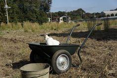 猫車とネコ11