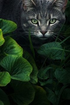 Cats and herbs. Click on picture for more info.