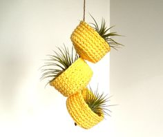 Mellow Yellow Hanging Air Plant Trio - Hanging Container Air Plants Included https://www.etsy.com/listing/150069487/mellow-yellow-hanging-air-plant-trio?ref=shop_home_active