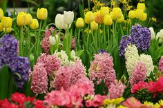 - The social network for meeting new people Spring Wallpaper, Spring Has Sprung, Meeting New People, Social Networks, Spring Time, Good Music, Beautiful Flowers, Landscape, Plants