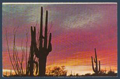 Postcards - United States #  803 - Sunset on the Desert, Arizona