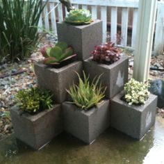 Cinder Block Succulent Garden, like structure so instead may try with Saltillo…