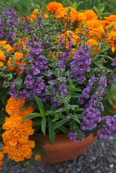 Angelonia and Marigold. A good combo with low watering requirement. From Doug Green