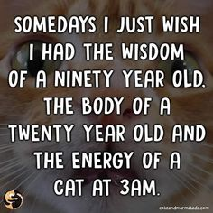 Right Meow, Twisted Humor, Laugh Out Loud, Cats Of Instagram, I Laughed, Funny Cats, Wish, Funny Memes, Thoughts