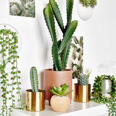 Übertopf Gold, Metall, D:8,5cm x H:10cm, gold - DEPOT Shops, Cactus Plants, Gold, Home Decor Accessories, Ad Home, Balcony, Tents, Cacti