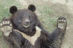 I AM BACK!! :)))))  the Kund Bear Sanctuary. by WSPA Canada, via Flickr
