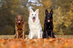 Can Dogs Share The Alpha Role?   Pets4Homes