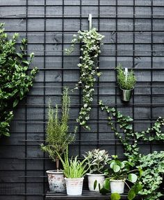 Urban Garden Ideas and Inspiration For City Apartments Idea for front patio space maybe do a similar piece inside for indoor/outdoor plants? The post Urban Garden Ideas and Inspiration For City Apartments appeared first on Outdoor Ideas. Vertical Garden Diy, Vertical Gardens, Back Gardens, City Gardens, Small Gardens, Vertical Planting, Modern Gardens, Water Gardens, Outdoor Plants