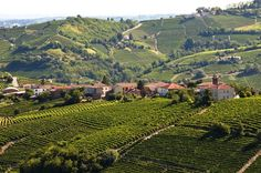 Vineyards and Piemontese town, from the trails taken during the Trail del Moscato races, in the Asti and Moscato wine zone   Sentieri e strade del Trail del Moscato #Piemonte #Piedmont #Italy
