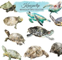 Watercolor Turtle Collection Commercial and Personal by kaazuclip