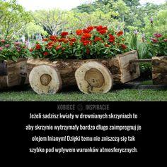 Jeżeli sadzisz kwiaty w drewnianych skrzyniach to aby skrzynie wytrzymały bardzo długo zaimpregnuj je olejem lnianym! Dzięki temu nie zniszczą ...