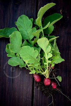 Urban agriculture -