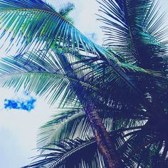 Sunday chill day. Sitting underneath a palm tree Enjoying the Palm Life! Get those last moments in before winter comes!  #PalmLife