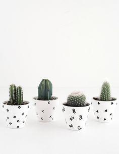 #pots #collection #succulents