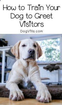 Pet Training - Want Fido to stop trampling everyone who walks through your door? Check out our guide for how to train your dog to greet visitors nicely in 5 steps! This article help us to teach our dogs to bite just exactly the things that he needs to bite #dogtrainingbiting