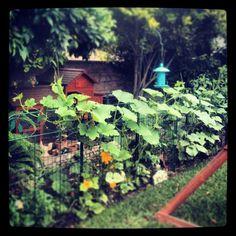 Sunny Simple Life: Life in the Chicken Run Garden