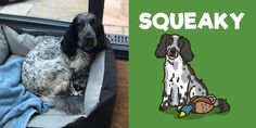 Pet Dogs, Dog Cat, Pets, Dog Nose, Cute Dog Pictures, Funny Dog Memes, Dog Selfie, Smiling Dogs, Dog Signs