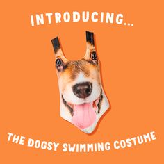👙INTRODUCING THE LADIES SWIM SUIT🏊 When life's a beach, you can always rely on your dog!🐶 Swimming Costume, Life S, Women Swimsuits, Your Dog, Beach, Movie Posters, Products, Women's Swimwear, Film Poster