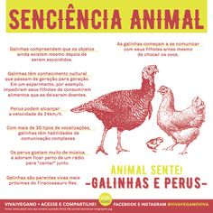 #govegan #vegan #vegano #veganismo #galinhas #galinha #perus #peru #aves #chester #pintinho #ovo #animalsente #senciencia #carne