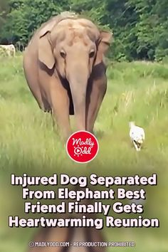 Unlikely Animal Friends, Elephant Sanctuary, Internet Friends, Types Of Animals, Dog Pin, Good Buddy, Waiting For Her, Normal Life, Dog Memes
