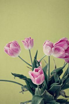 Tulips Tulips, Lana, Green, Photography, Photograph, Fotografie, Photoshoot, Tulip, Fotografia