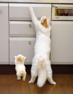 Allez maman, tu vas te rendre!