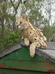 40 minutes from Knysna. Knysna, Online Tickets, South Africa, Trip Advisor, Centre, Cape, Wildlife, Places, Photos