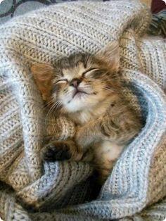 chaton mignon dors dans couvertures