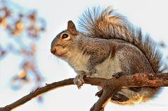 Squirrel of My Dreams  #500px #squirrel #photography