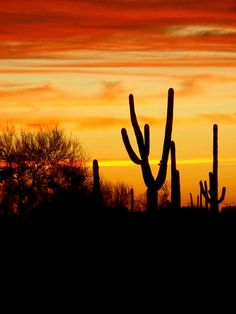 Sonoran Desert Sunset by ScenicSW, via Flickr