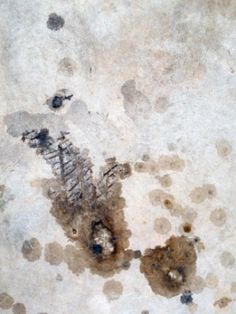How To Get Oil Stains Off Of A Driveway Oil Stains