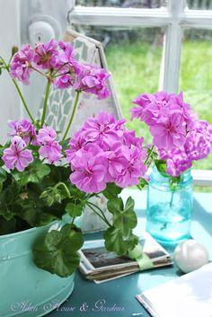 An ivy geranium in the aqua planter looks charming. ♦๏~✿✿✿~☼๏♥๏花✨✿写☆☀🌸🌿🎄🎄🎄❁~⊱✿ღ~❥༺♡༻🌺<TU Feb ♥⛩⚘☮️ ❋ Geranium Plant, Pink Geranium, Summer Flowers, Pink Flowers, Beautiful Flowers, My Flower, Flower Vases, Ivy Geraniums, Back Gardens