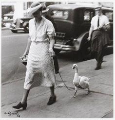 Lotte Jacobi, Ruth Jacobi, Berlin, Jacobi walking a duck! Jüdisches Museum, Berlin Museum, Berlin Berlin, Vintage Pictures, Old Pictures, Old Photos, Black White Photos, Black And White Photography, Funny Bird