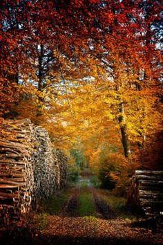 Autumn path between piles of logs