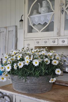 galvanized bucket of daisies