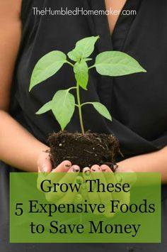 What do you grow when you have room for just a few plants? You can grow these 5 expensive foods to save money.
