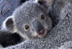 Curious Arthur at the Taronga Zoo