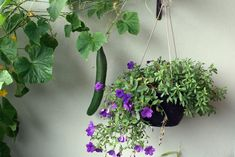 Totally Natural Healthy Ways to Increase Your Garden's Growth - A Garden Review
