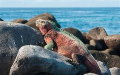Win a luxury Galapagos cruise, Indian Travel Agency,Tour Operators in India,Tailormade Tours to India,Budget Travel in India