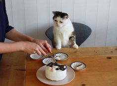 """Did you get the crusts? You know I don't eat the crusts...""  happy birthday, kitty"