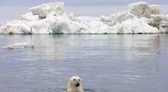 Un otoño dramático para la vida del Ártico