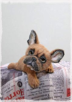 Bruno the french bulldog puppy By Jelena K. - Hello! Let me introduce you to…
