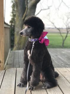 They're literally all over. Probably because they are 2 of the most popular pet dog breeds in America according to the American Kennel Club. Poodle Grooming, Dog Grooming, Grooming Salon, I Love Dogs, Cute Dogs, Poodle Cuts, Bulldog Breeds, Pet Breeds, Little Dogs